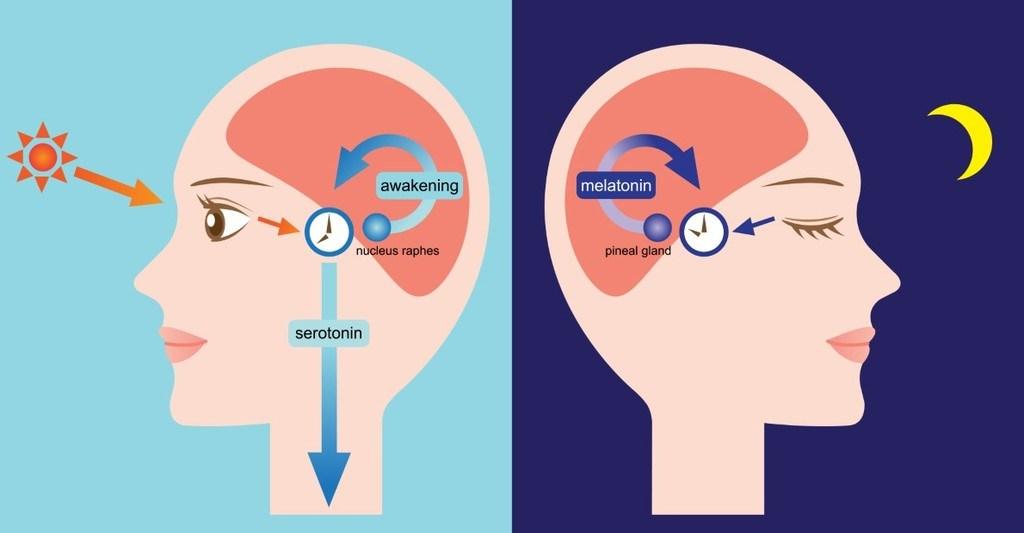 Serotonin und Melatonin